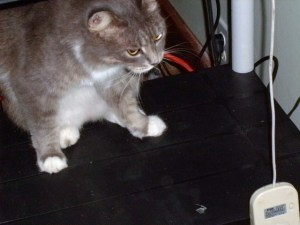 cat+mouse